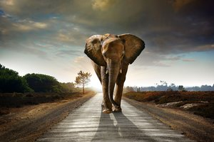 Elephant Walking On The Road Hdr 8k