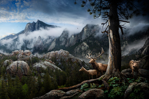 Elk Forest Landscape Conservation Wallpaper