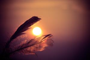 Feathers Sunbeams Of Sun 5k Wallpaper