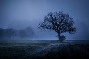 Field Fog Trees Blue Weather Cold 4k 5k Wallpaper