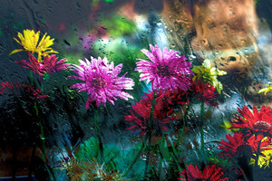 Flowers Behind Glass Drops Wallpaper