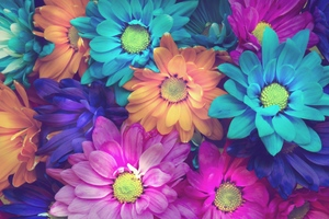 Flowers Colorful Petals