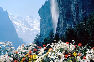 Flowers Mountains Cliff Wallpaper