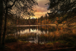 Forest Lake Landscape Wallpaper
