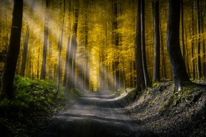 Forests Roads Rays Of Light 5k Wallpaper