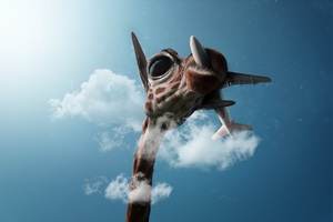 Giraffe Passing Plane Wallpaper