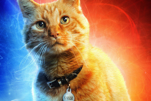 Goose The Cat In Captain Marvel Wallpaper