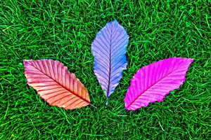 Grass Fallen Colorful Leaves 5k Wallpaper