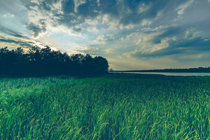 Green Grass Field Sky Reflection Wind 5k Wallpaper