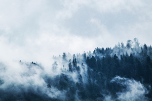 Green Pine Trees Covered With Fogs 5k Wallpaper