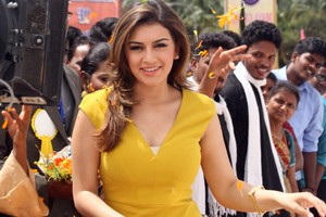 Hansika Motwani Cute Wallpaper