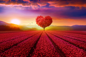 Love 1920x1080 Resolution Wallpapers Laptop Full Hd 1080p