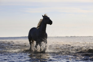 Horse Running On The Beach 4k 5k
