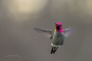 Hummingbird Desktop