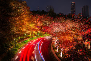 Japan Tokyo Roads Autumn Trees Night