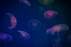 Jellyfish Digital Art Wallpaper