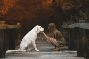 Labrador Retriever With Cute Girl