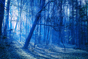 Last Blue Light Of Evening In Woods Wallpaper