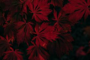 Leaf Dark Vignette Autumn Fall 4k