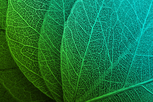 Leaf Macro Stock Wallpaper