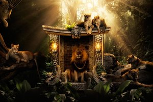 Lions Jungle Wallpaper