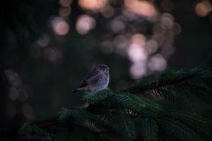 Little Bird In Forest Wallpaper