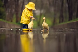 Little Boy Child Playing With Ducks