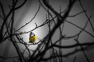 Little Yellow Bird 5k Wallpaper