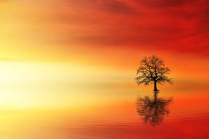 Lone Tree In Water At Dusk Wallpaper