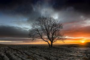 Lonely Tree In Drought Field Sunset