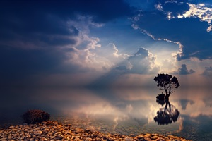 Lonely Tree Sunbeams Wallpaper