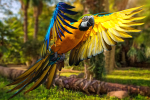 Macaw Parrot 5k Wallpaper