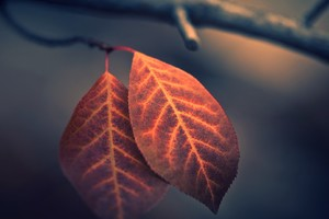 Macro Leaf Photography Wallpaper
