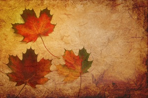 Maple Leaves Texture Background Wallpaper