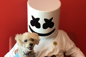 Marshmello With Dog Wallpaper