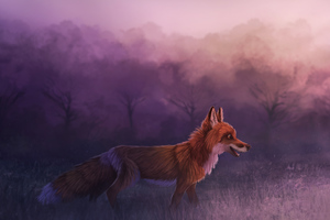 Misty Red Fox 4k Wallpaper
