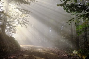 Morning Fog Sunbeam Forest 5k