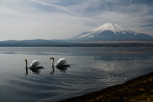 Mount Fuji Landscape View Ducks 5k Wallpaper