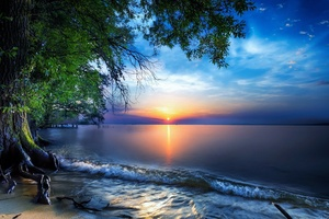 Nature Sea Sky Skyline Sun Tree Wallpaper