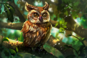 Owl Colorful Art Wallpaper