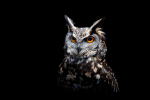 Owl Dark Background Wallpaper