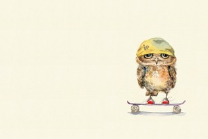 Owl On Skateboard Wallpaper