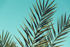 Palm Leaves Sunlight Day Green Leaves Wallpaper
