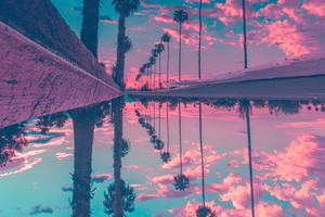 Palm Trees Reflection Sky Wallpaper