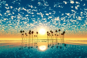 Palm Trees Reflection Sunset