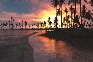Palm Trees Sunset Sea