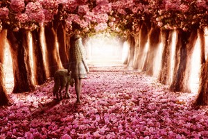 Pink Flowers Path Wallpaper