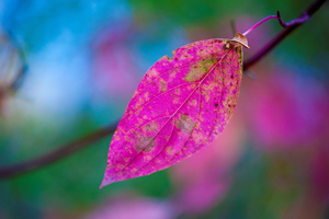 Pink Leaves Wallpaper