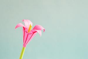 Pink Petaled Flower 5k Wallpaper