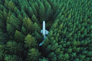 Plane In Middle Of Forest 4k Wallpaper